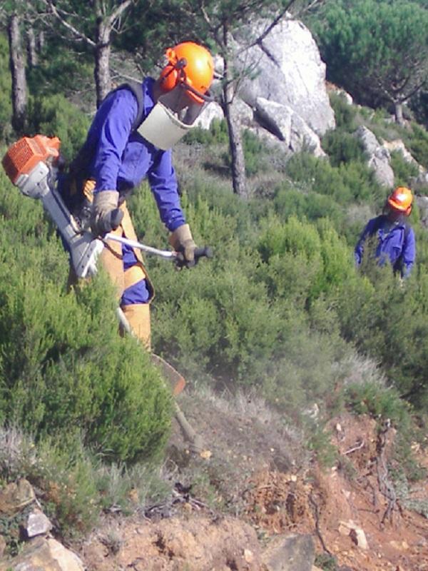 Andalucía resalta como objetivo de las ayudas para la prevención de incendios la restauración de ecosistemas
