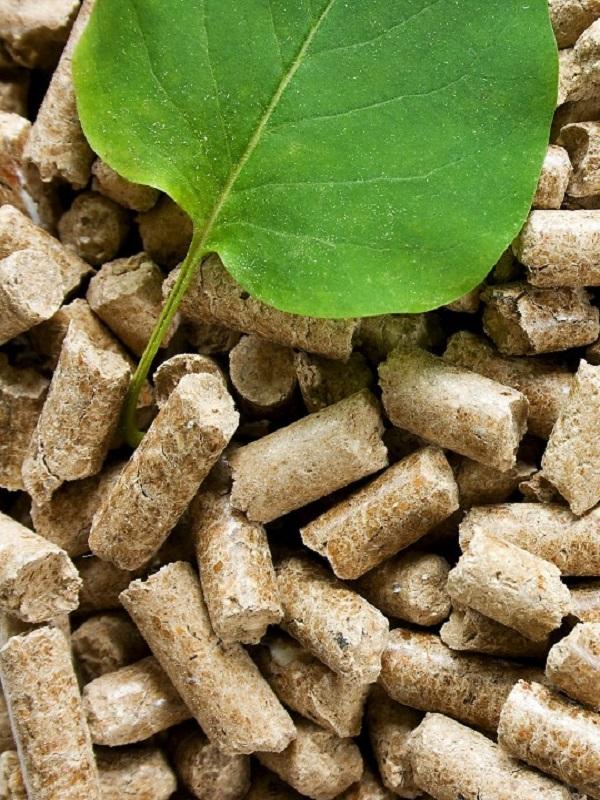 Acciona quiere elevar a los altares la Biomasa en Extremadura
