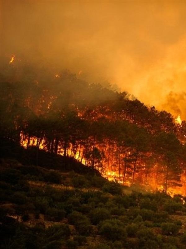 Doñana se recupera del incendio forestal