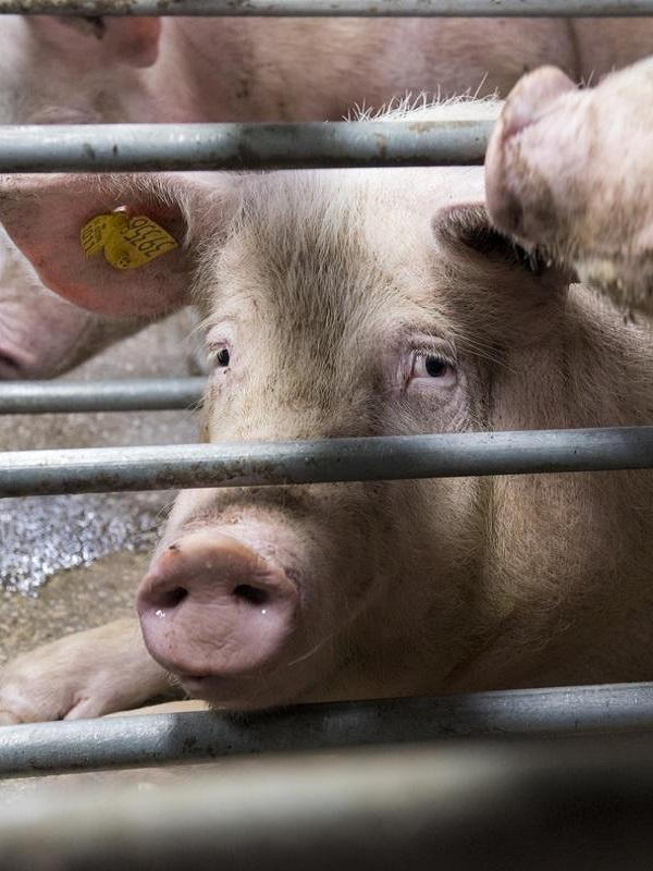 Si comemos menos carne se emite menos CO2