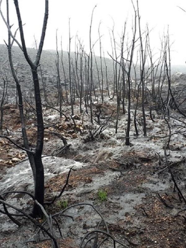 Buenas expectativas con la recuperación de Las Peñuelas tras el incendio forestal