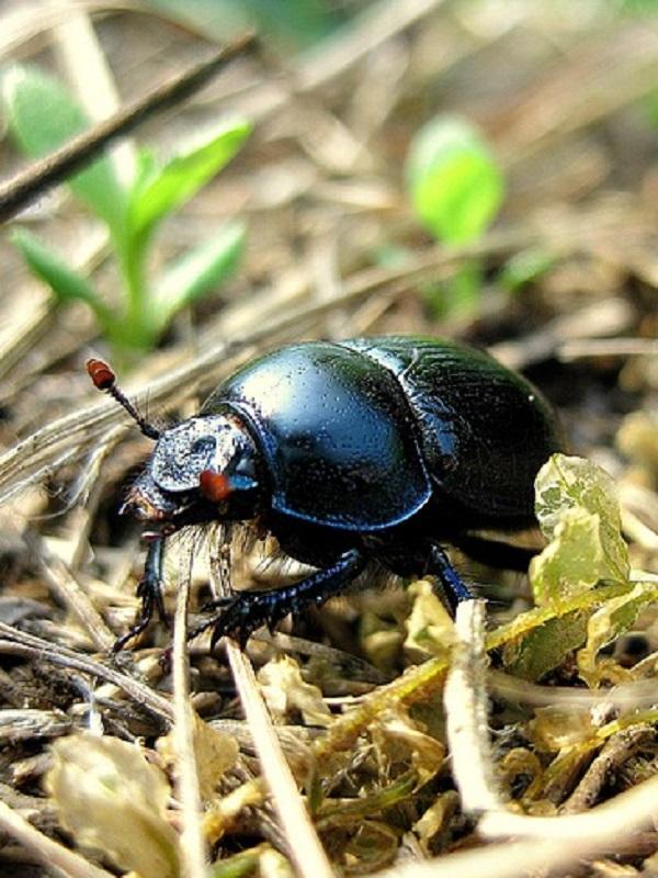 ¿Cómo evolucionaron los escarabajos?
