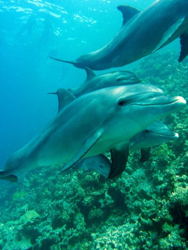 Todos los secretos de cómo bucean los mamíferos marinos