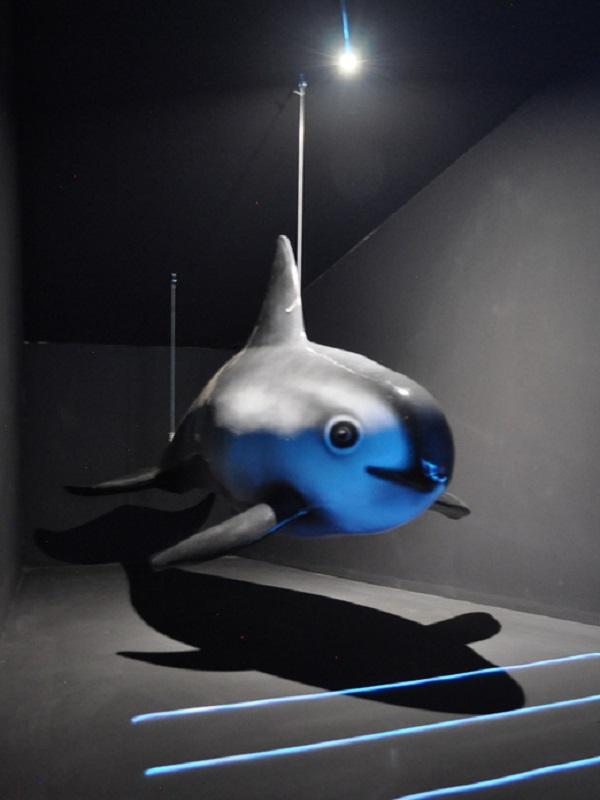 Vaquita marina entre redes: una historia que no debe repetirse