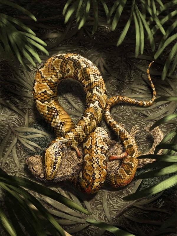 El primer embrión fósil de serpiente replantea cómo evolucionaron