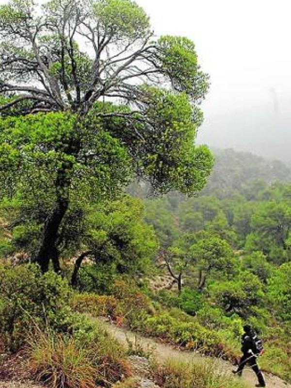 Un estudio pionero analiza los efectos de los bosques sobre la salud humana