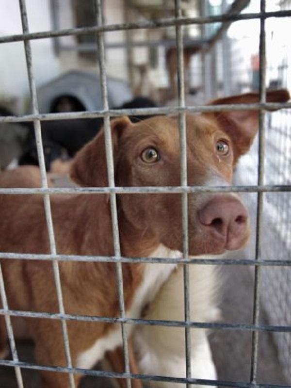 Maltrato animal a perros en Motril