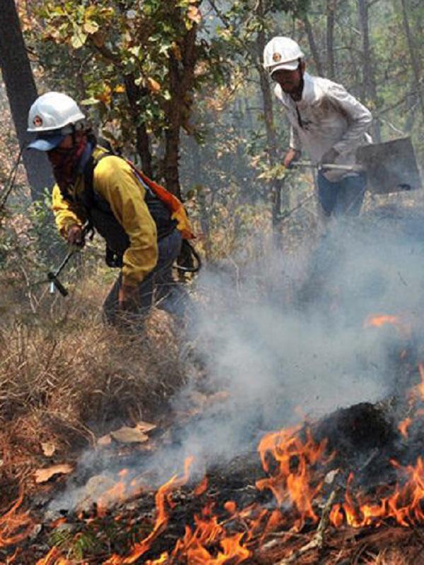 Tecnología verde para predecir el riesgo de incendios forestales con meses de antelación