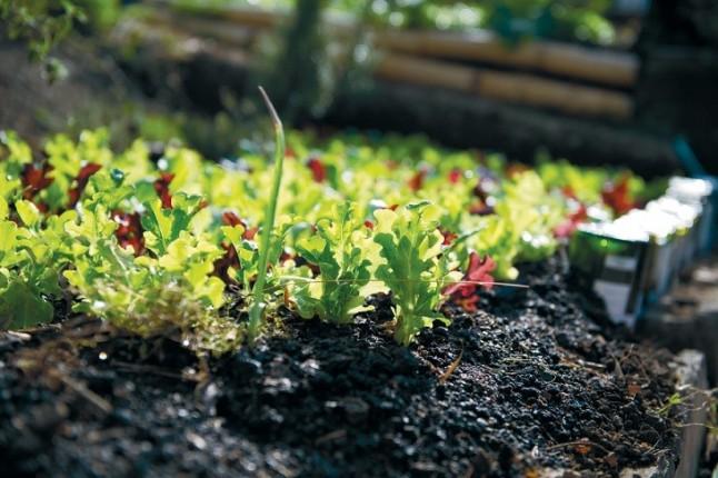 La Escuela Municipal de Agroecología Urbana de Madrid para 2019