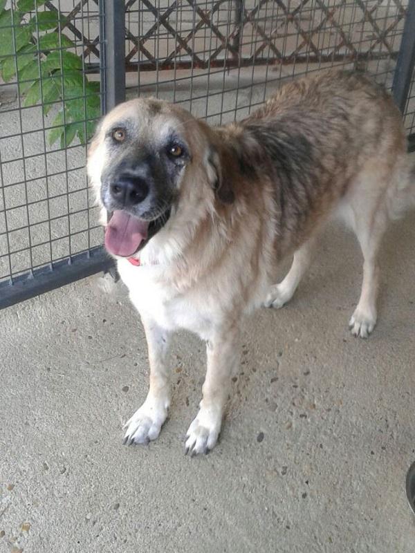 Una persona sin hogar puede alojarse con su perro en un centro de acogida público