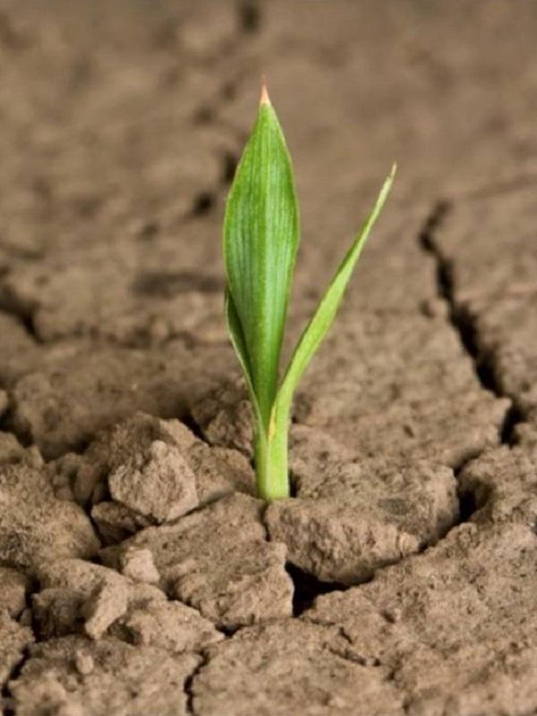 La enorme importancia de la agricultura para frenar el cambio climático y preservar el medio ambiente