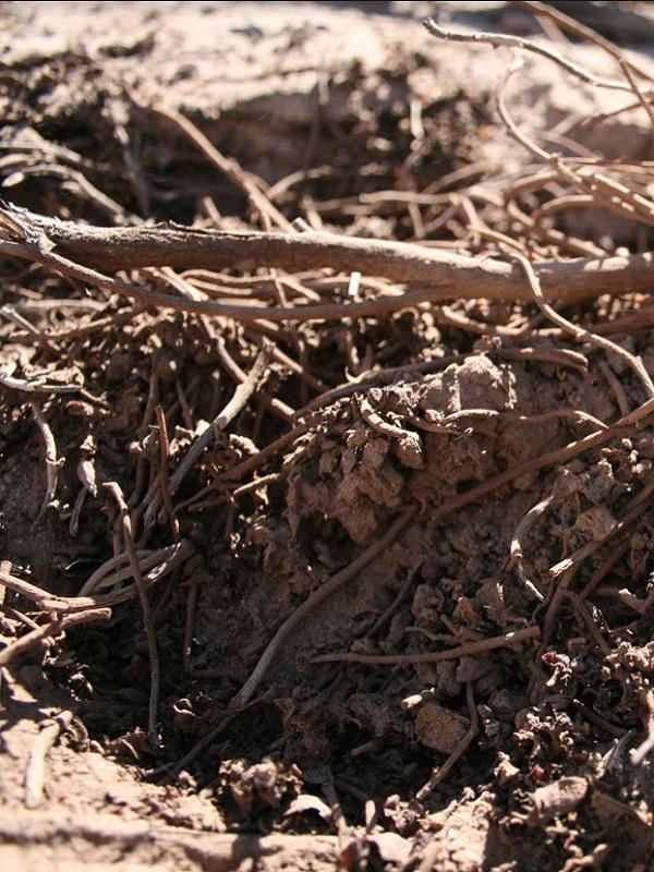 Pueblo sin agua, pueblo muerto: la advertencia del Acta de Tarapacá sobre la sobreexplotación del agua en el Desierto de Atacama