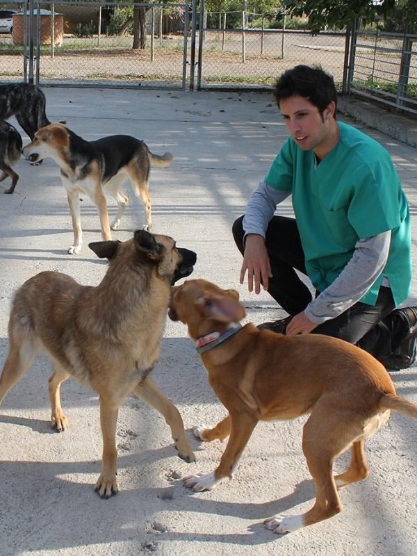 Valladolid aportará ayudas a entidades colaboradoras del Centro de Protección Animal