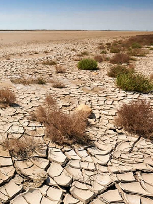 Estrategias de mitigación y adaptación al cambio climático en Coahuila