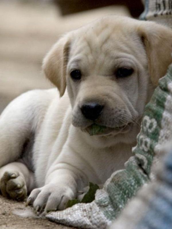 El Consejo Andaluz de Protección de Animales de Compañía busca la complicidad de la ciudadanía