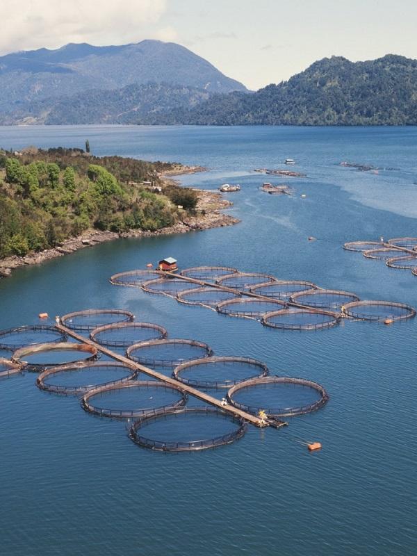 La UPO de Sevilla crea CEPA, una 'spin-off' de acuicultura sostenible para el alimento de peces
