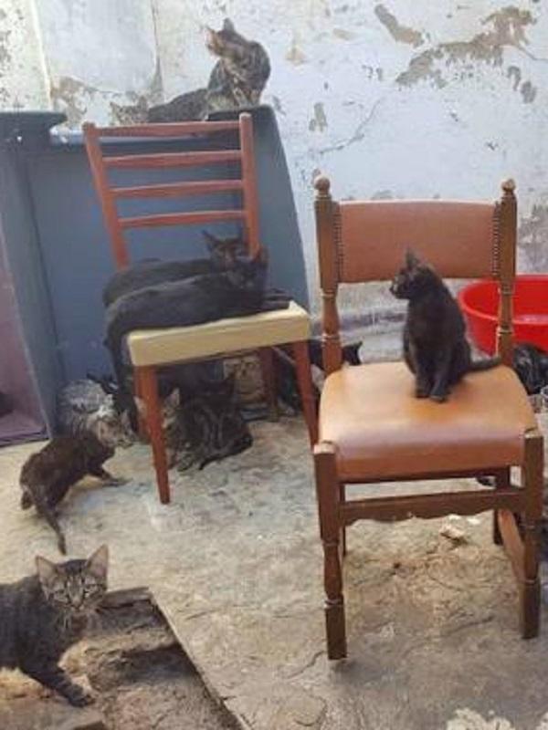 Retiran 100 gatos de una casa de 37 metros cuadrados en Málaga
