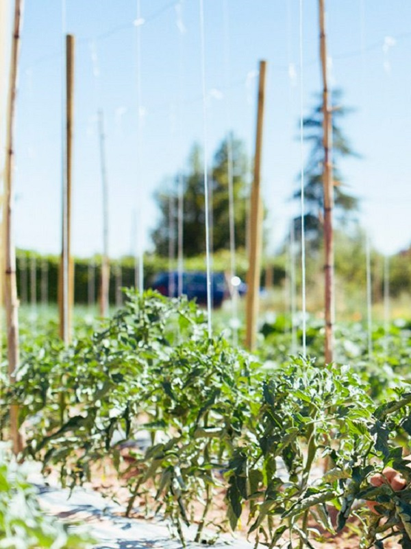 Valverde de Leganés trabaja en la reconversión de un terreno degradado en huerta ecológica