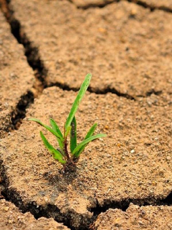 Greenpeace pide al nuevo Gobierno un compromiso urgente en la lucha contra el cambio climático