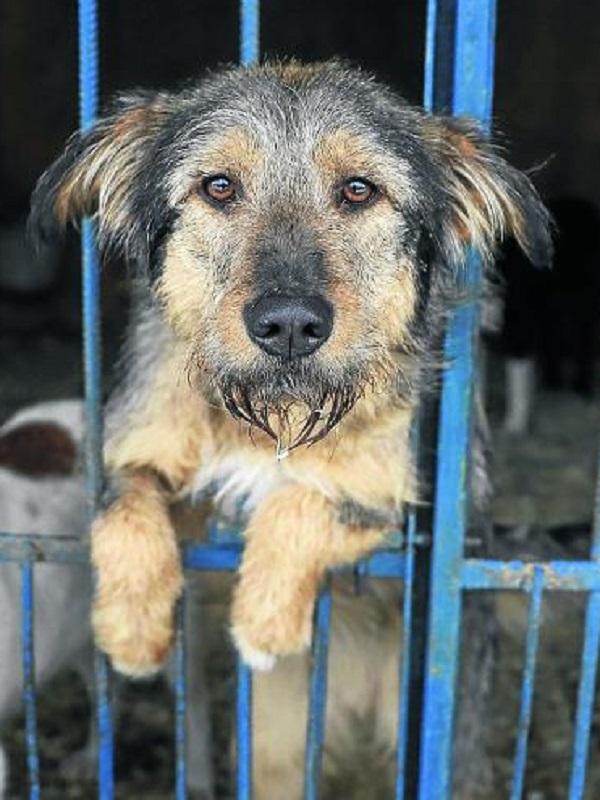 La protectora de Huelva y el sacrificio de perros