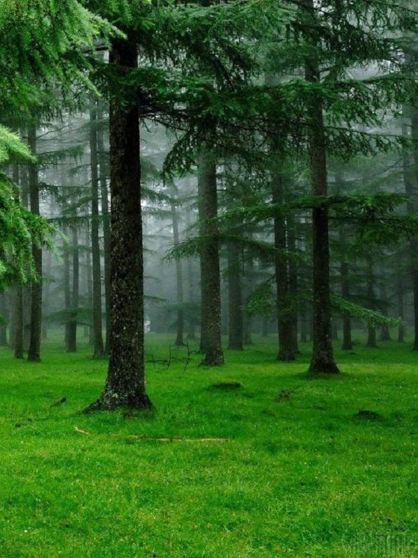 La infinita importancia de los bosques contra el cambio climático