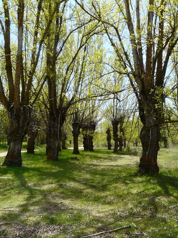 Los anteproyectos de leyes de Administración Ambiental y Conservación al Patrimonio Natural vascos se abren a la participación