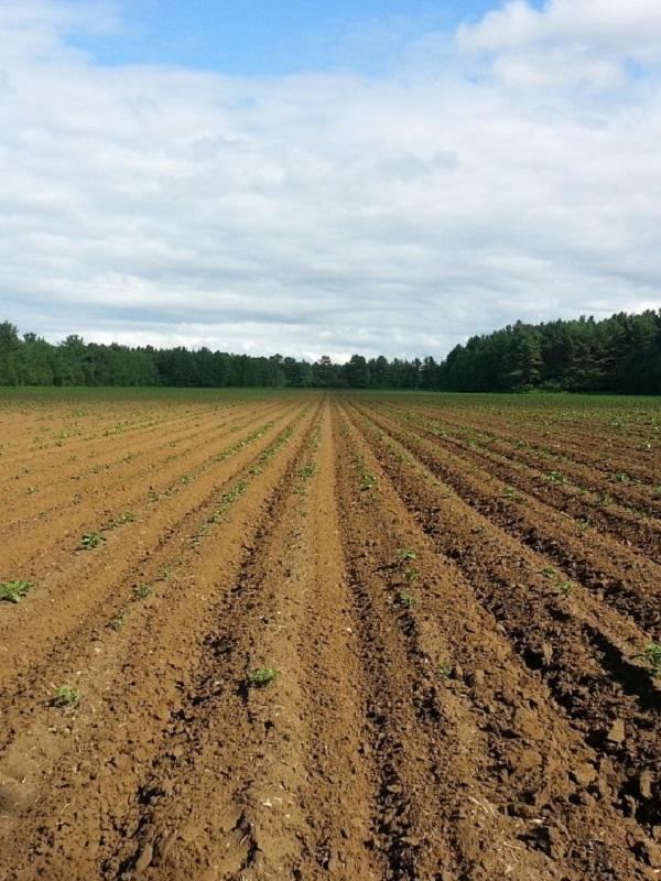 Impulsan varios proyectos de investigación para la adaptación del sector agrario al cambio climático en Andalucía