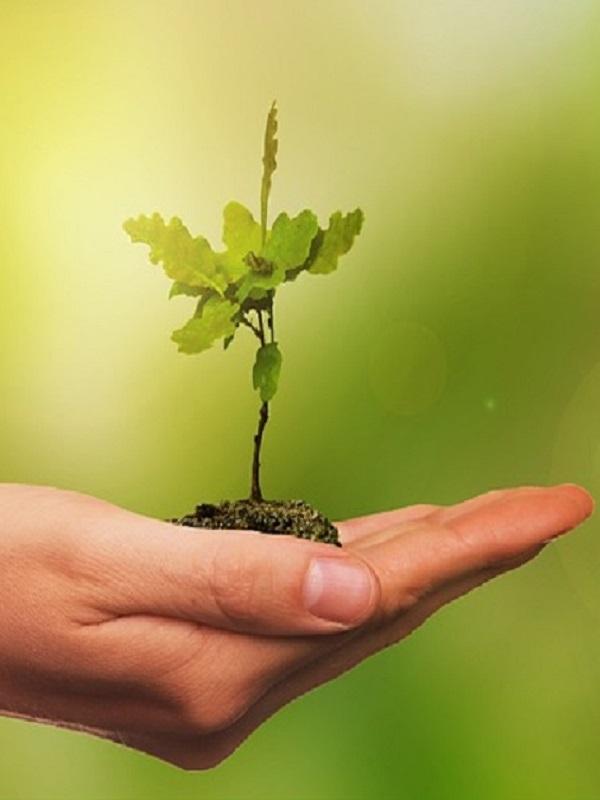 Amigos de la tierra pide justicia medioambiental al nuevo Gobierno
