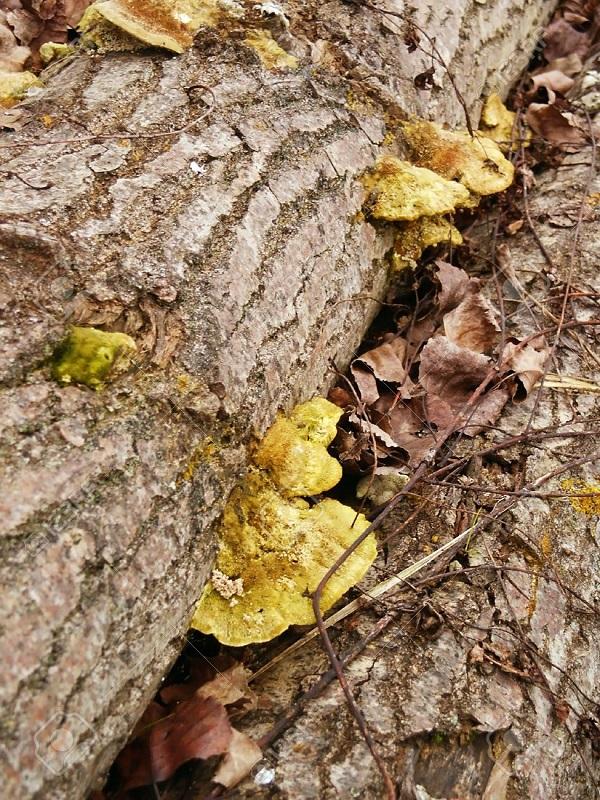La contaminación fulmina los hongos que alimentan los árboles