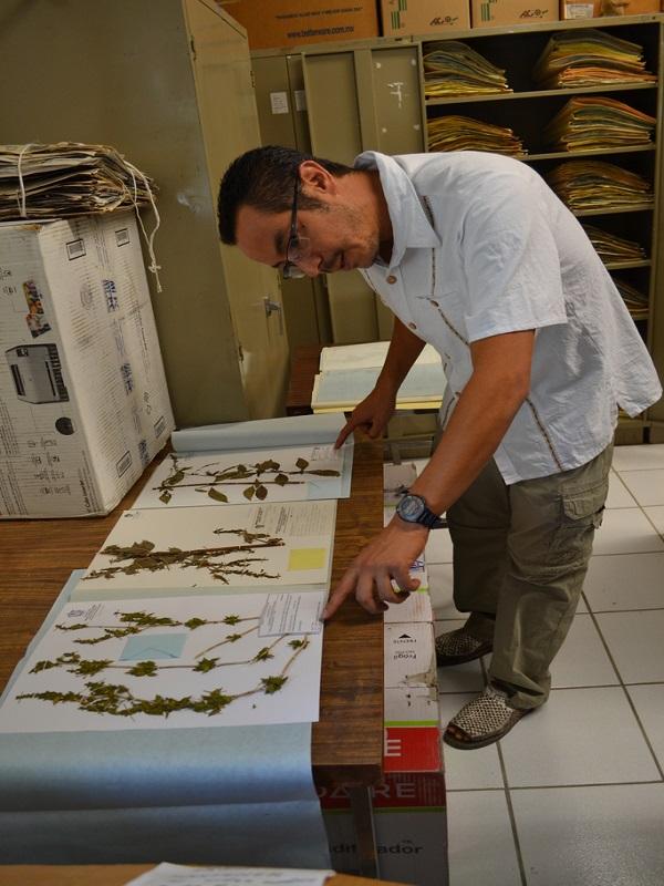 Herbario IBUG, refugio histórico de plantas