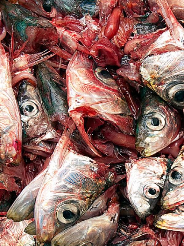 Innovadora bandeja biodegradable para productos de pescadería