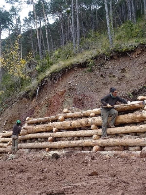 Los bosques de montaña del Pallars Sobirà necesitan 300 voluntarios para este verano