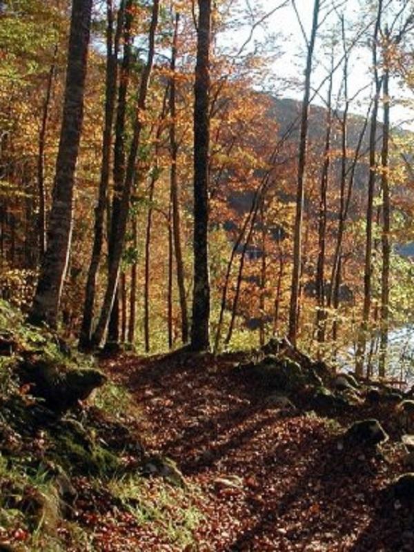 Navarra, lluvia de millones para ayudas a trabajos forestales