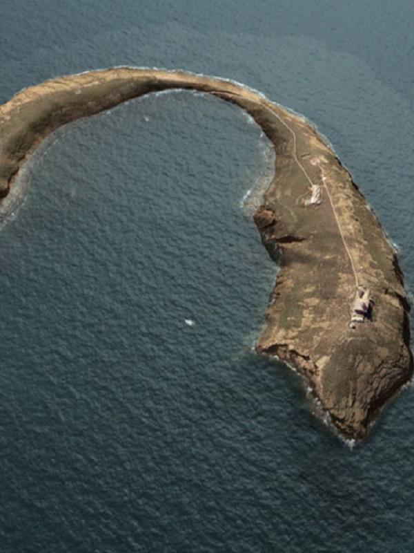 Día Mundial de los Océanos Liberando tortugas en la Reserva Marina de Islas Columbretes
