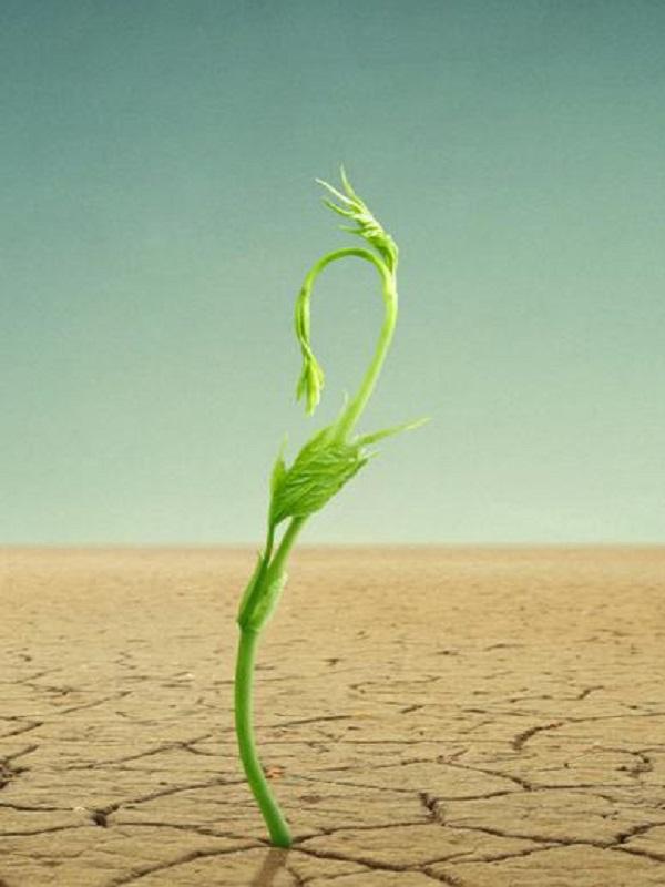 El cambio climático reducirá la producción de verduras