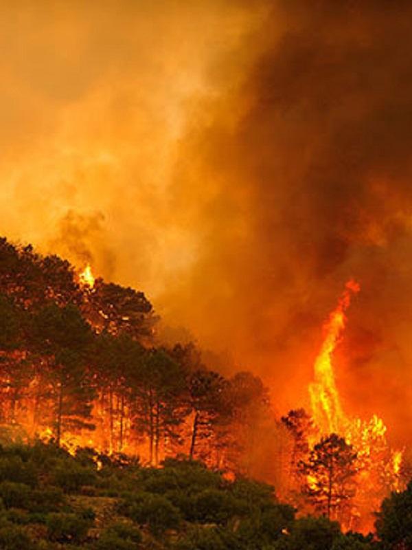 España se enfrenta a los incendios forestales sin planes de emergencia