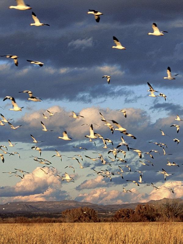 Expertos del CIMA de Tarifa (Cádiz) estudian la transmisión de enfermedades a través de aves migratorias