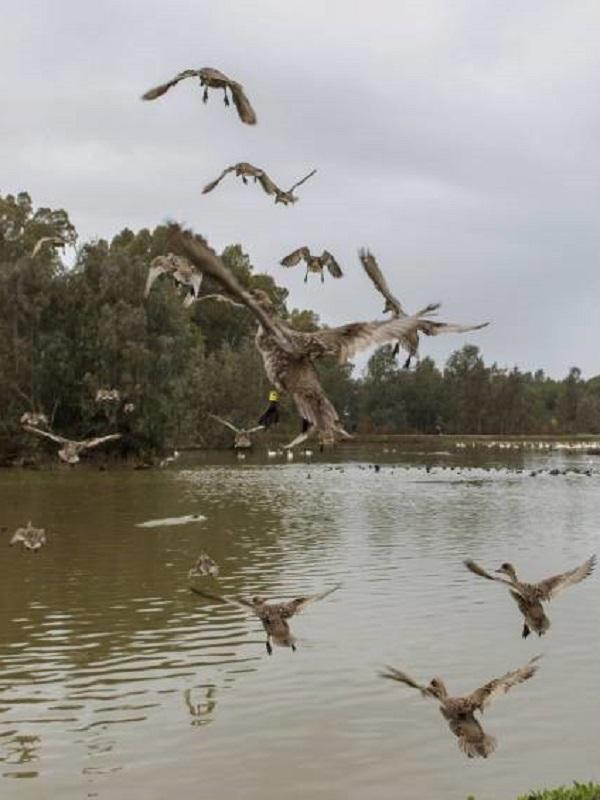 Doñana no necesita un trasvase