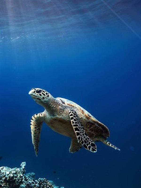 Cádiz, campaña sobre cetáceos y tortugas marinas