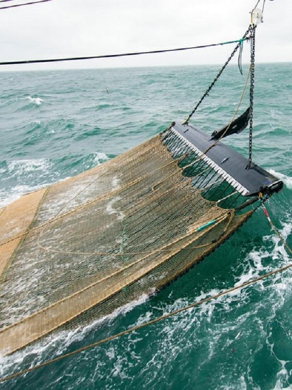 Holanda se cubre de gloria con la pesca eléctrica