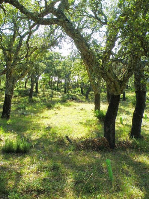 Aprobado un plan director contra la fragmentación de los ecosistemas en Andalucía