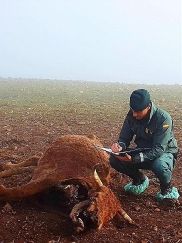Proanimal recurre la decisión de Junta de Castilla – La Mancha de sacrificar 50 reses en Navalpino