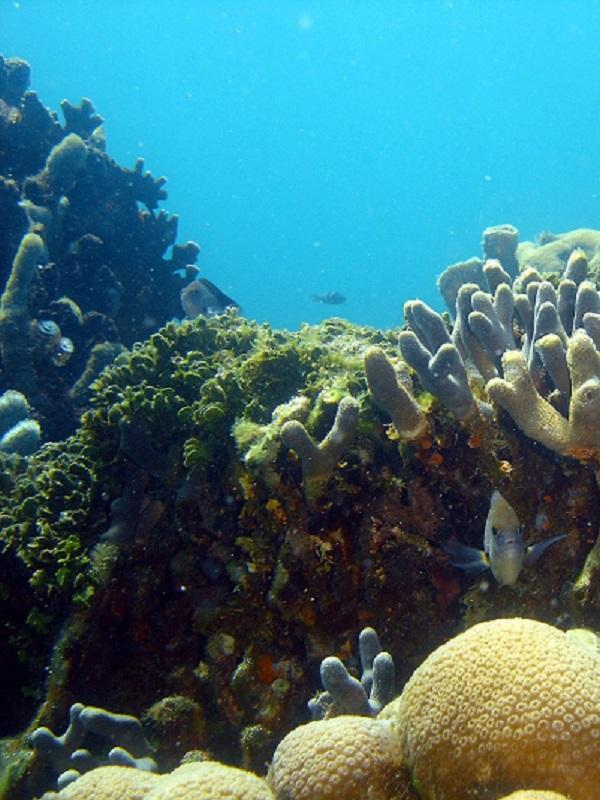 Los arrecifes de coral minimizan los daños causados por las inundaciones