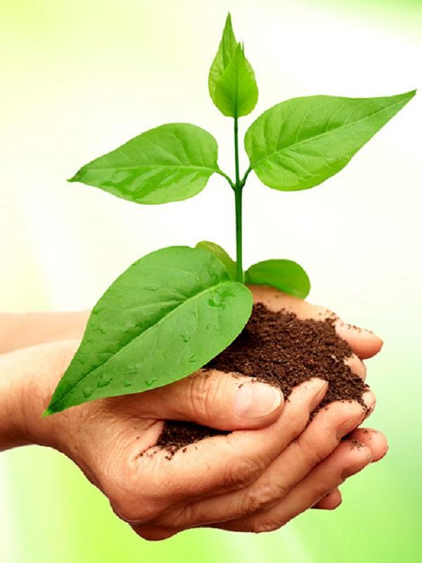 Granada impulsa proyectos para la sostenibilidad ambiental