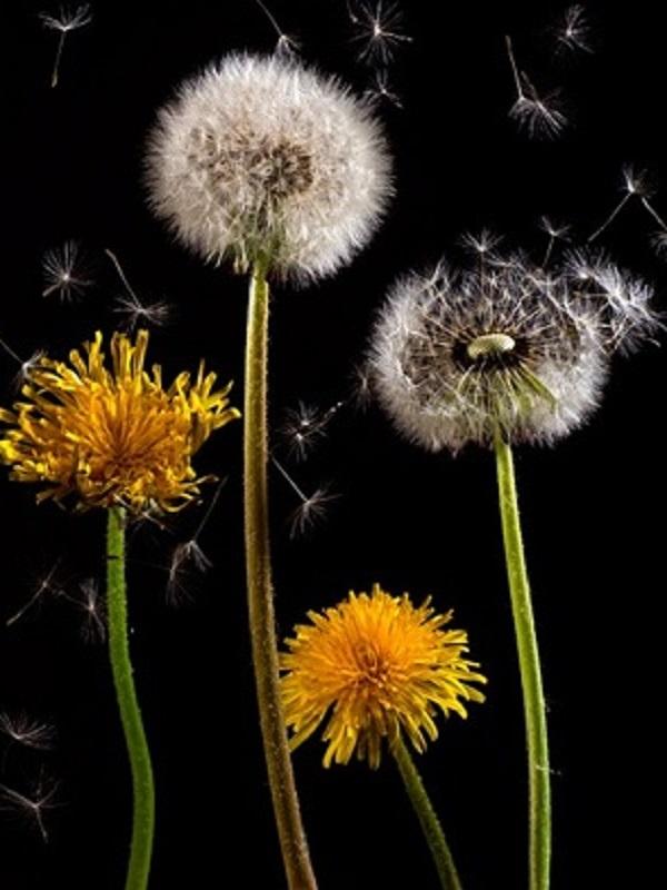 ¿Cuánto polen respiramos?