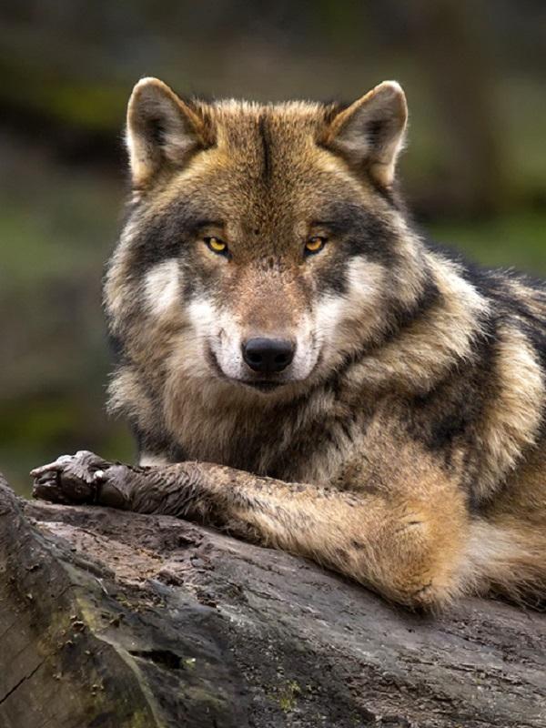 Polémica a cuenta del Catálogo Vasco de Especies Amenazadas