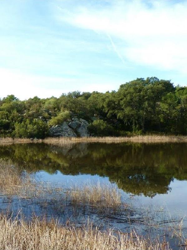 La Junta y Heineken acondicionan la laguna de la Dehesa de Abajo para facilitar la cría de aves