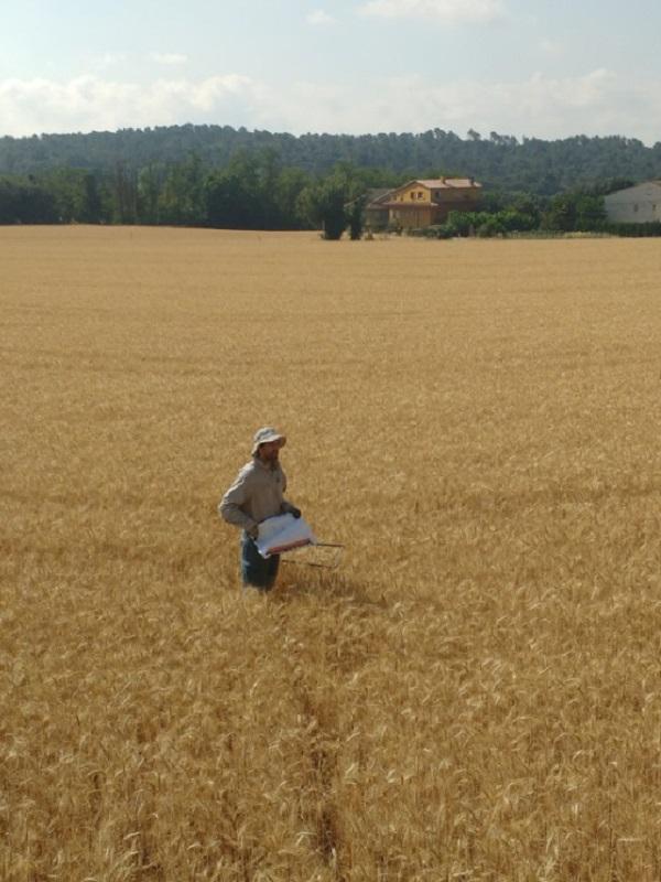 La intensificación agrícola no es un buen plan
