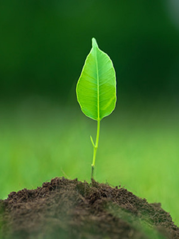Ecologistas reciben con esperanza el nombramiento de Hugo Morán como secretario de Estado de Medio Ambiente