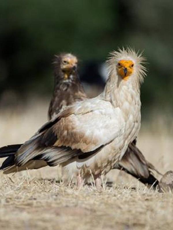 La Junta reforzará medidas para prevenir el impacto de las aves en los parques eólicos